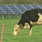 BBC News: Wedmore community 'solar farm' switched on